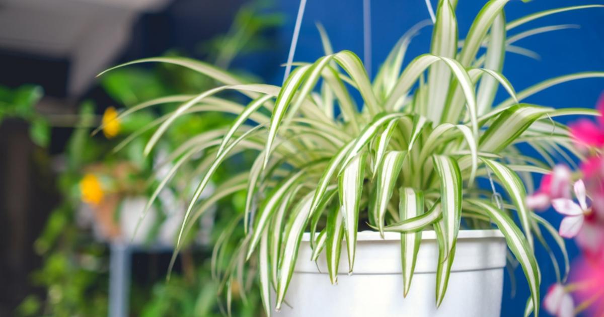 A 11 legjobb szobanövény apartmanokhoz
