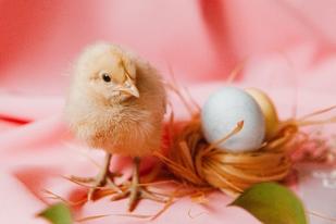 A növénytermesztés és az állattenyésztés a modern ember számára rejtelmes tudománynak számít. Így sokan nem is mernek belevágni, pedig nem nagy ördöngösség.