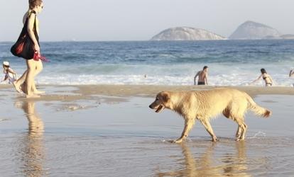 napsütéses tengerparton horog randevú túlsúlyos ember