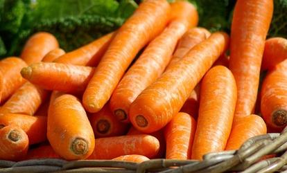 zn vagy Növényvédelem címke – ez a kifejezés sok helyen megtalálható az  Agrároldalon a33d63064f