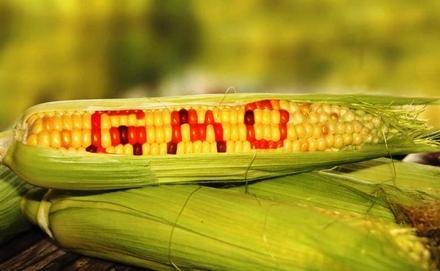 Génmódosított ételek