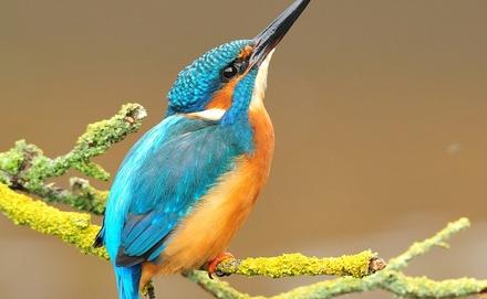 A nem mindennapi kék madarat mutatjuk be nektek