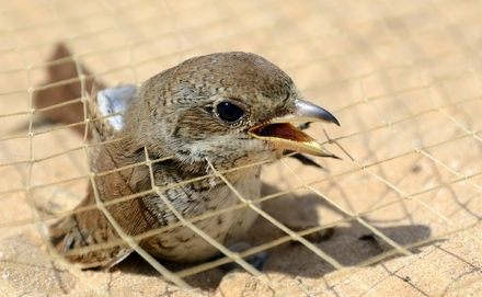 Egyiptom a vándormadarak veszte