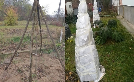 Növényvédelem télen