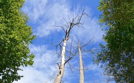Újszülöttek ligeti fákat rongáltak