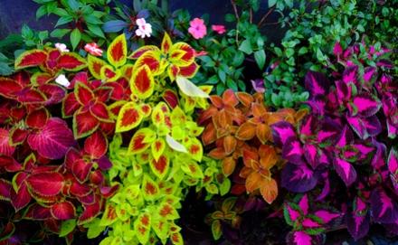 A 10 legjobb növény a kert árnyékos részeibe