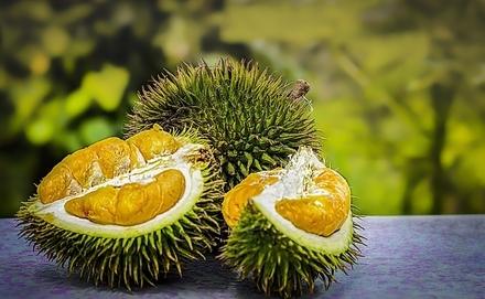 Ismerd meg a világ legbüdösebb gyümölcsét, a duriánt