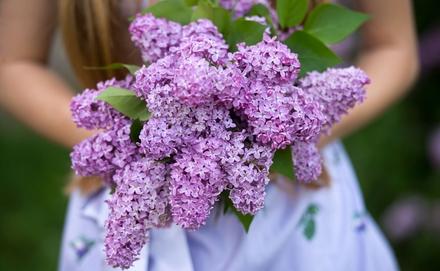 Illatos virágok minden kertbe
