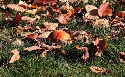 Őszi növénybetegségek és kártevők a kertben