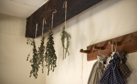 Minden a fűszernövények szárításáról