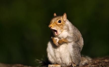 Találkoztál már részegen dülöngélő mókussal a kertben? – VIDEÓ!