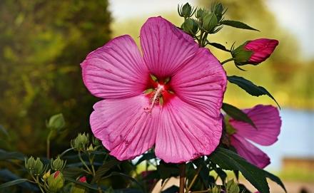 Olvasd el cikkünket és ismerd meg te is ezt a nem mindennapi növényt