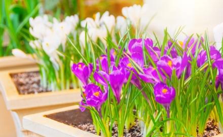 Évelő növények a kertedbe