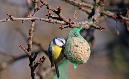 Ezekkel ne etesd a madarakat