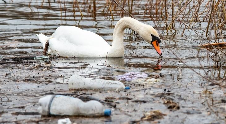 Tele vannak a hazai vizek műanyaggal