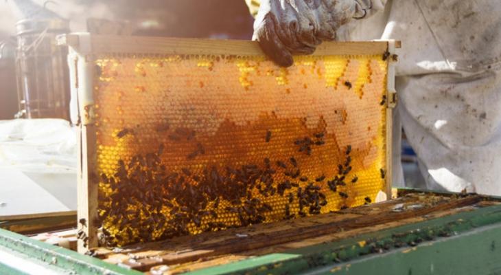Méhészeti feladatok szezononként