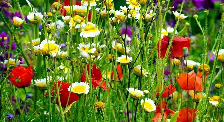 Ismerjük meg a tavaszi virágokat!   Játsszunk együtt!