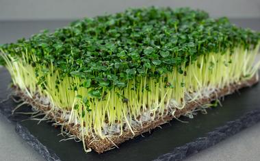 Mikrozöldek termesztése otthon, akár a lakásban is