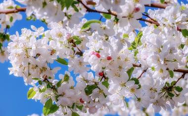 Itt az ideje a virágzáskori permetezésnek