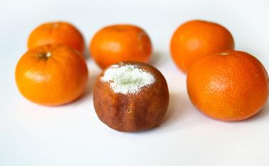 Védekezzünk a gyümölcsfák gombabetegségei ellen