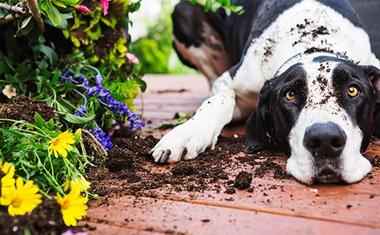 Hozzunk létre kutyabarát kertet