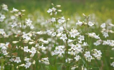 Ismerd meg ezeket az amerikai vadvirágokat