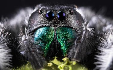 Ezért ne fújj le soha egy pókot rovarölő spray-vel!